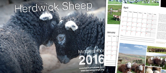 herdwick sheep calendar 2016