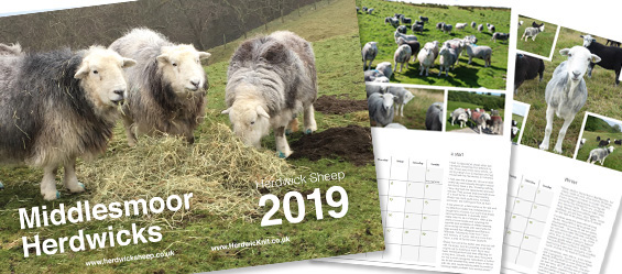 middlesmoor herdwick sheep calendar 2019